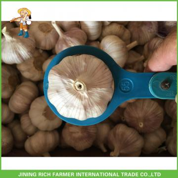 Fresh Normal White Garlic 5.5CM In 10KG Carton For Brazil Cheapest Price High Quality