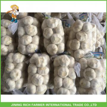 Fresh Pure White Garlic 5.0 cm In 10kg Carton For Egypt Cheapest Price High Quality