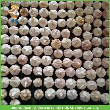 New Crop Fresh Normal White Garlic 5.0 cm ,5p In 10KG Carton For Exporter