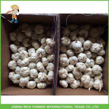 2017 New Crop Fresh Snow White Garlic Mesh Bag In Carton For Sale