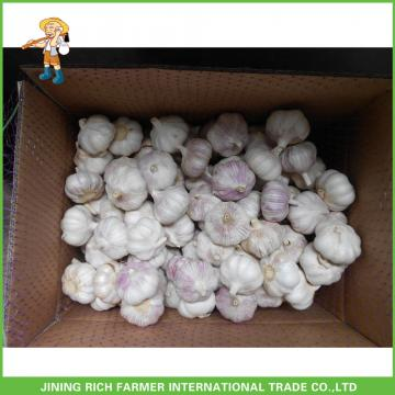 Top Quality And Best Price Fresh Normal White Garlic 5.0CM Mesh Bag In Carton