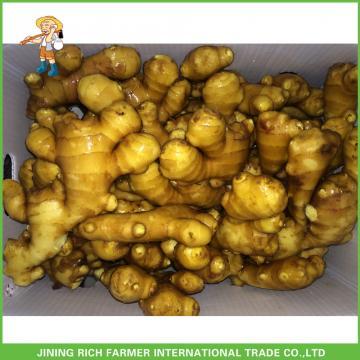 Fresh Ginger 200g Up For All Market