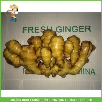 Fresh Ginger 2017 Best Price
