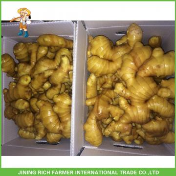 Sale High Quality Chinese Fresh Ginger 150g Up
