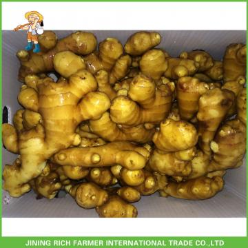 150g+ Fresh Ginger With Low Price