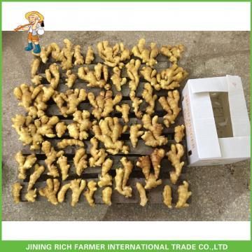 150g Fresh Mature China Fresh Ginger Exporter Market Prices