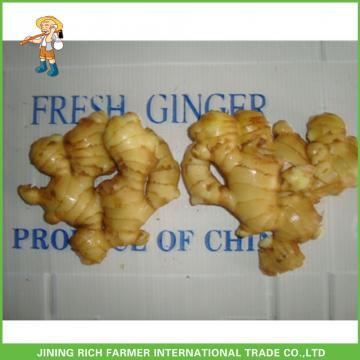 High Quality 150g Fresh Ginger In 6kg Pvc Carton For Dubai