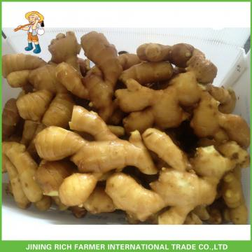 Bulk Fresh Ginger 150g To Dubai Market