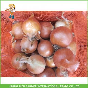 Fresh Yellow Onion Round Shape