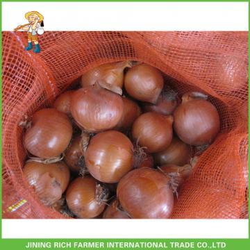 Fresh Round Onion Grade A New Arrival