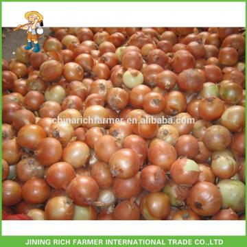 Factory Price Fresh Yellow Onion Red Onion