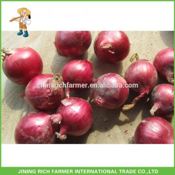 Fresh Red Onion Chinese New Crop 10KG Mesh Bag