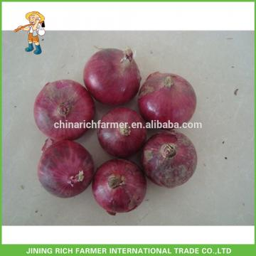 Wholesale New Crop Fresh Red Onion