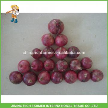 Lowest Price With Good Quality Fresh Red Onion