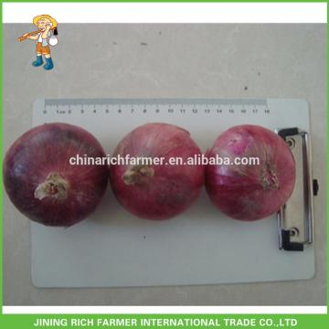 High Quality Fresh Onion 5-7cm Size