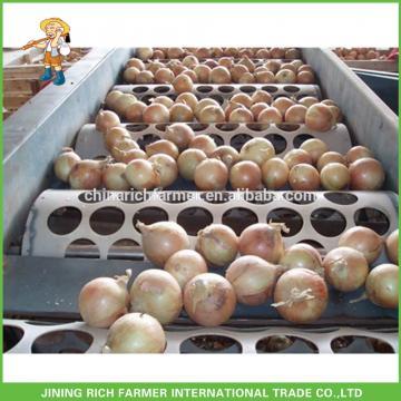 Chinese Fresh Yellow Red Onion In Bulk