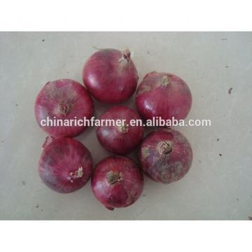 Import Fresh Yellow Onions