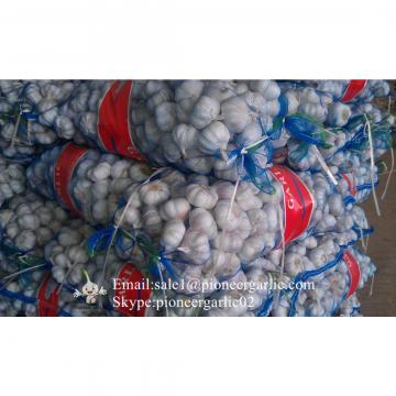Best Quality 5.5cm Purple Garlic Packed In Mesh Bag