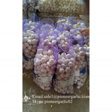 Jinxiang Shandong Fresh Normal White Garlic 5cm Loose Packing in Mesh Bag