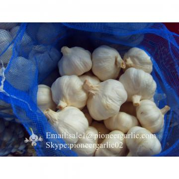 2017 New Crop 4.5cm Normal White Fresh Garlic 10kg Mesh Bag Packing