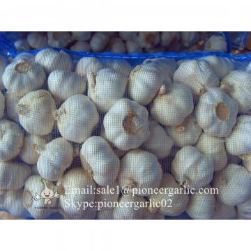 New Crop Chinese 5.5cm Pure White Fresh Garlic Small Packing In Mesh Bag