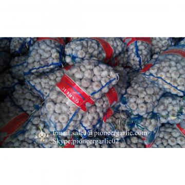 Chinese Fresh Normal White Garlic Processed in Garlic Factory for Sale