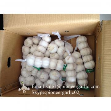 5.5cm Normal White Garlic Produced in Jinxiang Shandong China