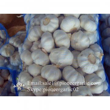 Nature Made 5.0-5.5cm Chinese White Garlic Material of Black Garlic in Mesh Bag