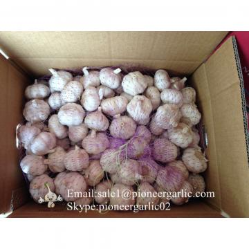 Chinese Fresh 5.5cm Normal White Garlic Small Packing In 10kg Box