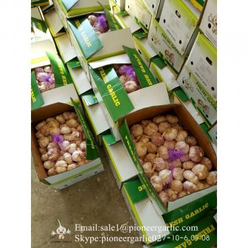Chinese Fresh Normal White Garlic Loose Packing