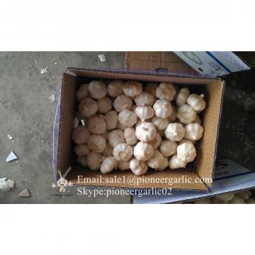 Chinese Fresh Normal White Garlic Packed In Box