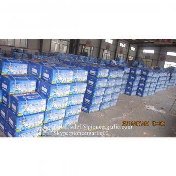 Jinxiang Shandong Fresh Normal White Garlic 5cm Loose Packing in Carton Box