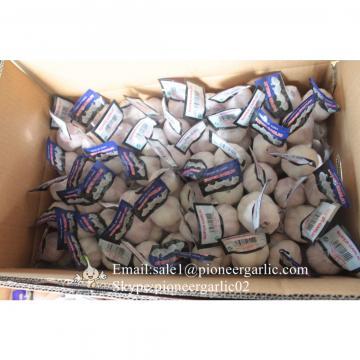 100% Natural Snow White Garlic Packed in Mesh Bag or Carton Box From Jinxiang China