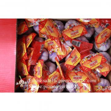 Chinese Jinxiang Pure White Fresh Garlic Small Packing In 10kg Box