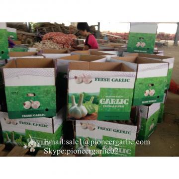 Chinese Natural 5.5cm Red Garlic Loose Packing In 10kg Carton Box