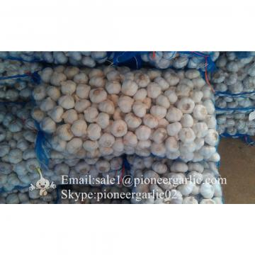 New Crop Fresh Jinxiang Normal White Garlic 5cm And Up In Mesh Bag Packing