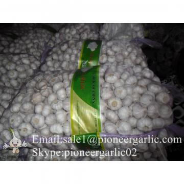 4.5-5cm Normal White Chinese Fresh Garlic In Mesh Bag Packing