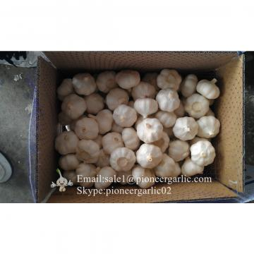 5.0cm Purple Garlic Packed in Carton Box