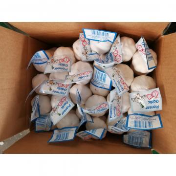 Garlic Price of Pure White Small Packing Garlic