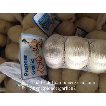 New Crop Chinese 5.5cm Snow White Fresh Garlic Small Packing In Box