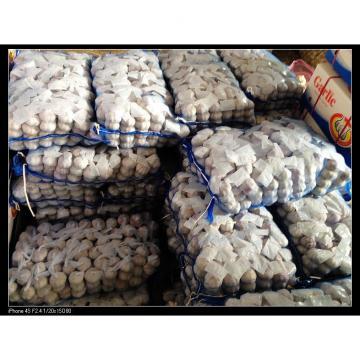 Nature Made 6.0cm-6.5cm Jinxiang Red Garlic Material of Black Garlic in Mesh Bag