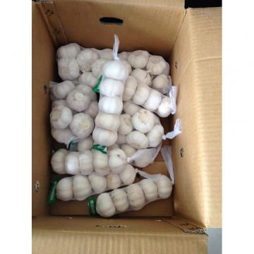 New Crop Chinese 4.5cm Snow White Fresh Garlic 3p small packing in box