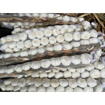 5.0cm Pure White Snow White Garlic Exported to Honduras