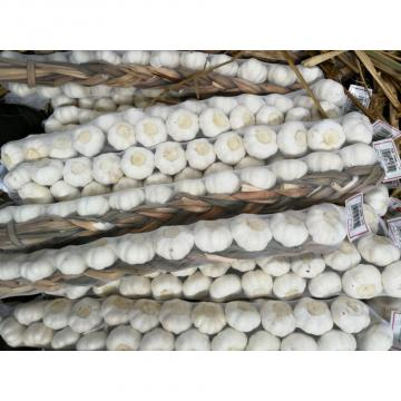 Hot Sale Chinese Fresh Purple Red Garlic Big Garlic 6.0cm and up Packed in Mesh Bag