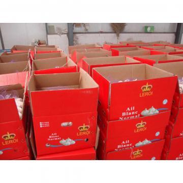 5.5cm Normal White Fresh Jinxiang Shandong Garlic in Box or Mesh Packing