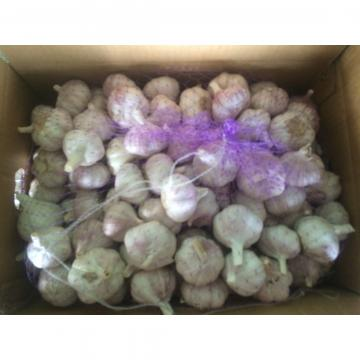 Hot Sale Best Quality Chinese Normal White Garlic