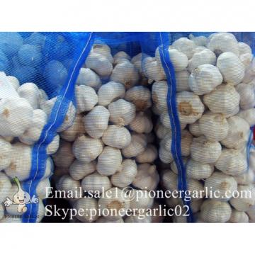 Best Quality 6.0cm Normal White Garlic Packed According to client's requirements