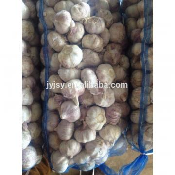fresh garlic from china 2017 crop