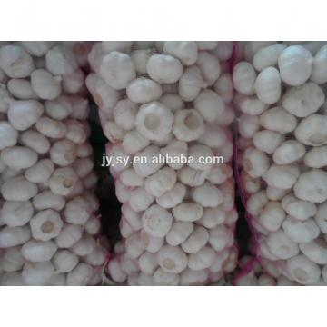 garlic of china superior quality and good price
