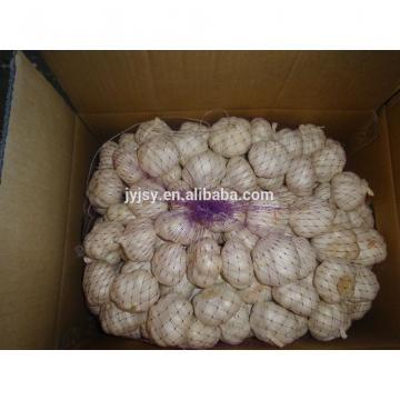 fresh normal and pure white garlic for 2017